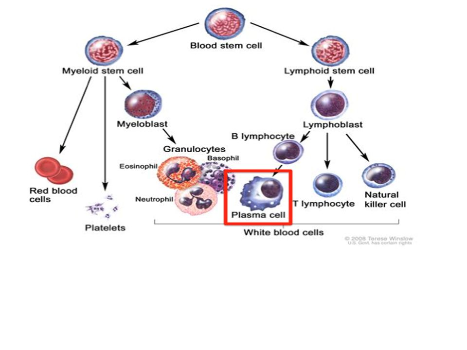 The Central Role of Hepcidin
