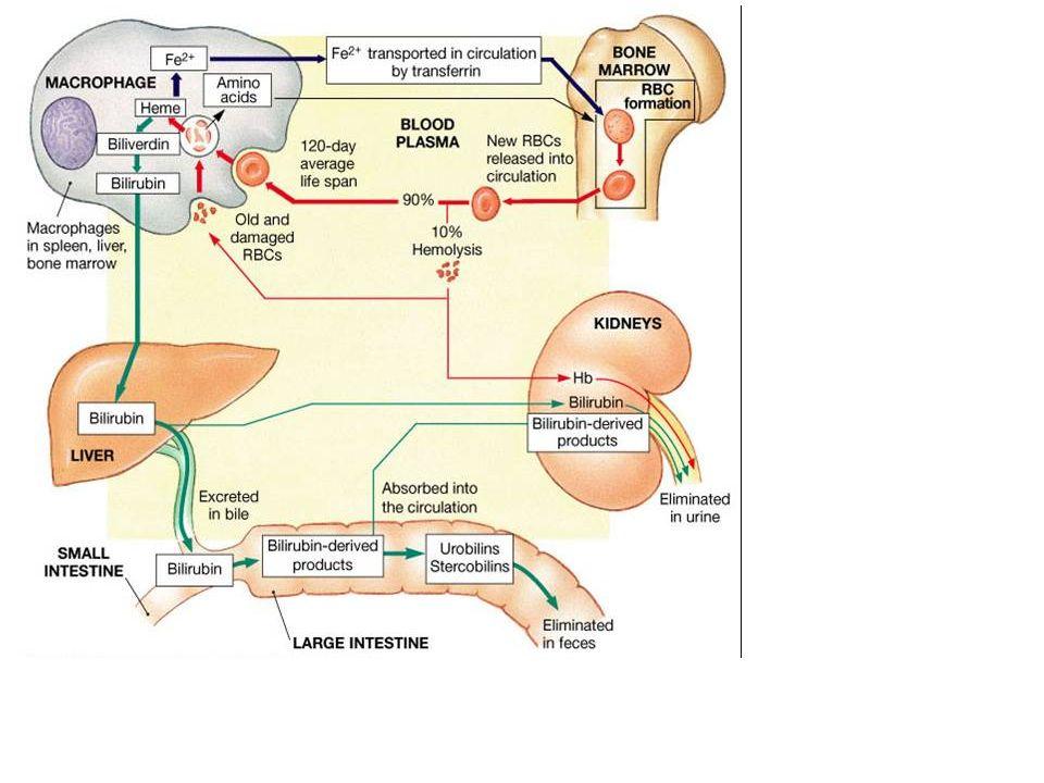 ΑΙΜΟΛΥΤΙΚΕΣ Για την επιβεβαίωση χρειαζόμαστε - LDH – υψηλή - Εμμεση χολερυθρίνη υψηλή - Απτοσφαιρίνη χαμηλή Επιβεβαίωση διάγνωσης Αιμολυτική αναιμία