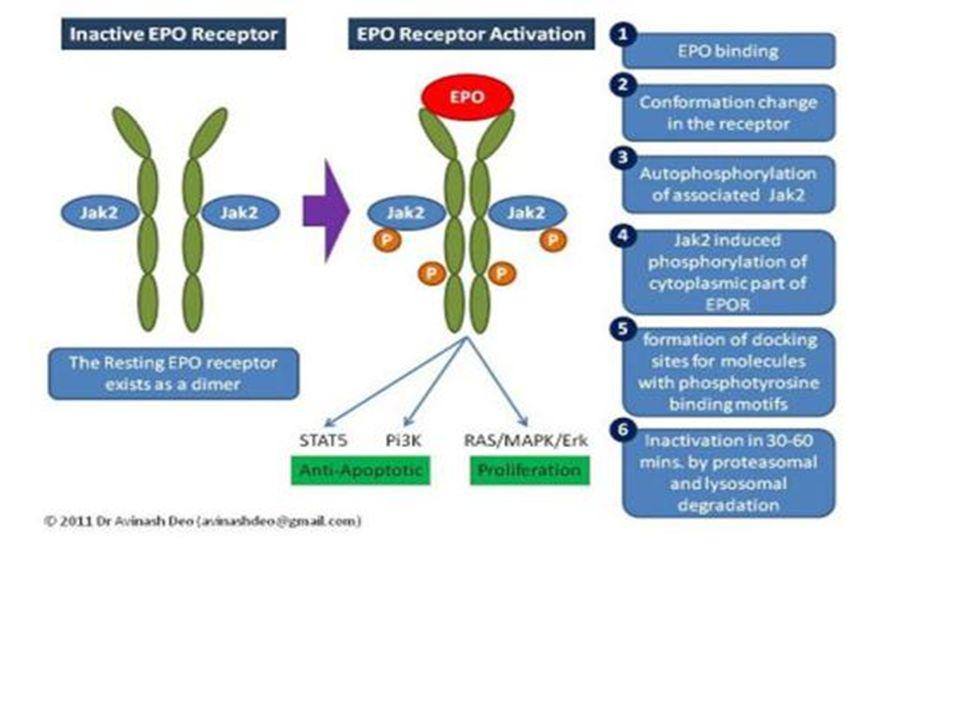 ΜΙΚΡΟΔΡΕΠΑΝΟΚΥΤΤΑΡΙΚΗ ΑΝΑΙΜΙΑ 2.Γονότυπος β s /β + Μέτρια ΑναιμίαΜέτρια Αναιμία Επώδυνες Αιμολυτικές Κρίσεις (σπάνια)Επώδυνες Αιμολυτικές Κρίσεις (σπάνια) Ηλεκτροφόρηση Hb: HbS=55-75%Ηλεκτροφόρηση Hb: HbS=55-75% HbA=10-30% HbA=10-30% HbA 2 >3.5% HbA 2 >3.5% HbF5-30% HbF5-30%