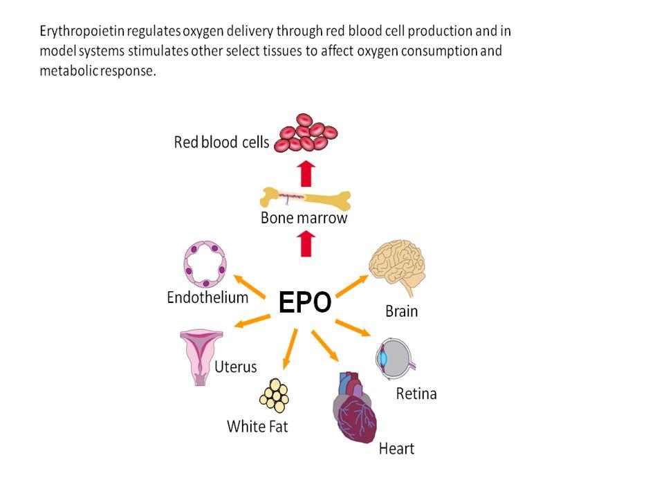 Pathophysiology of Polycythemia