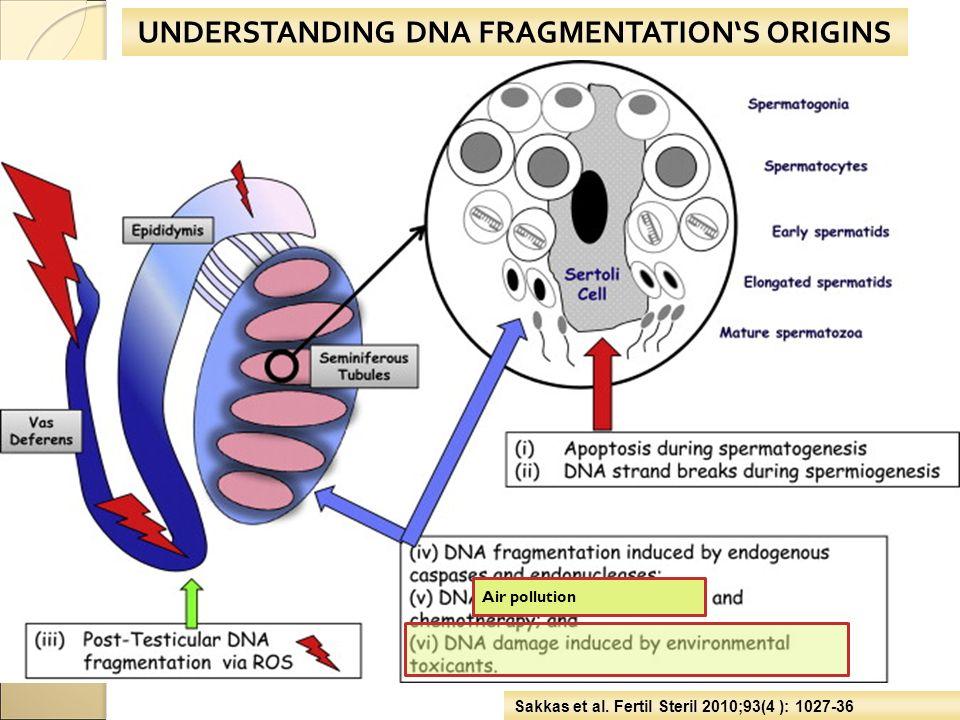 UNDERSTANDING DNA FRAGMENTATION'S ORIGINS Sakkas et al. Fertil Steril 2010;93(4 ): 1027-36 Air pollution