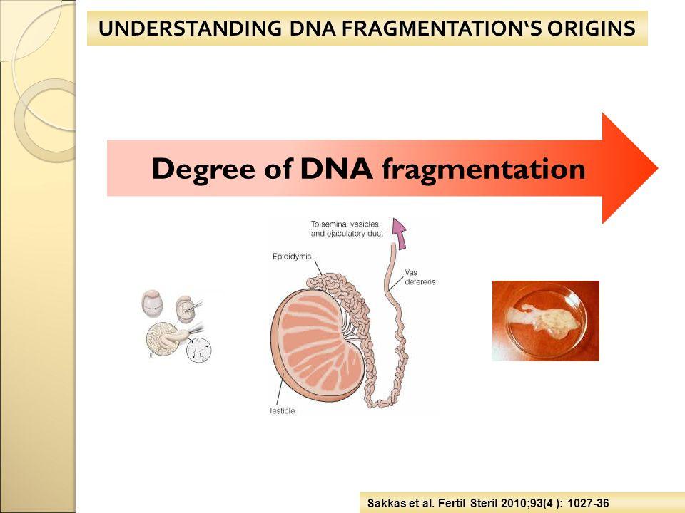 UNDERSTANDING DNA FRAGMENTATION'S ORIGINS Sakkas et al. Fertil Steril 2010;93(4 ): 1027-36 Degree of DNA fragmentation