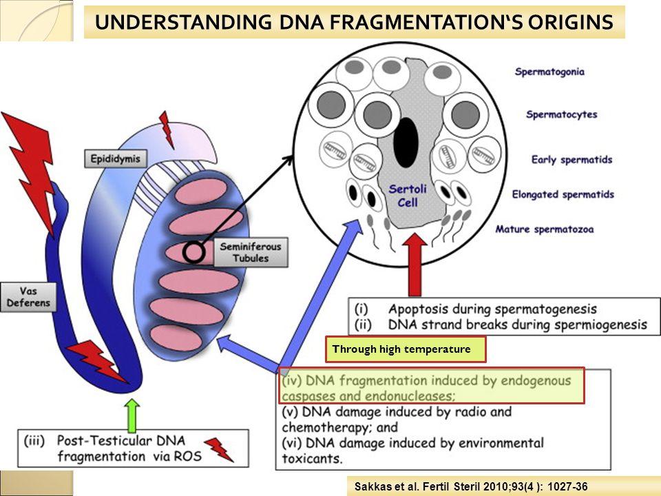 UNDERSTANDING DNA FRAGMENTATION'S ORIGINS Sakkas et al. Fertil Steril 2010;93(4 ): 1027-36 Through high temperature
