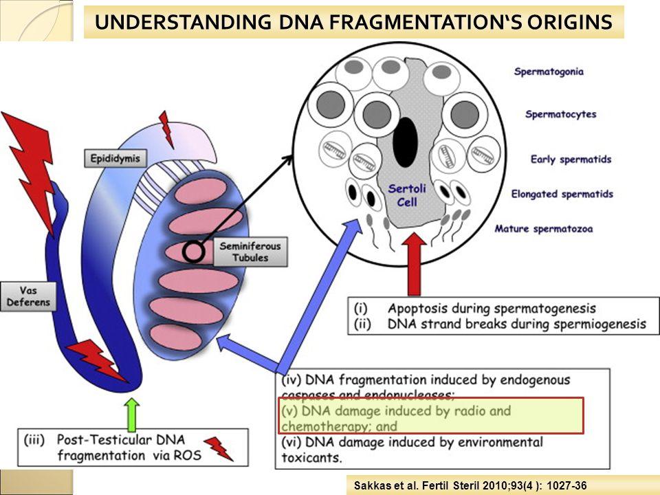 UNDERSTANDING DNA FRAGMENTATION'S ORIGINS Sakkas et al. Fertil Steril 2010;93(4 ): 1027-36