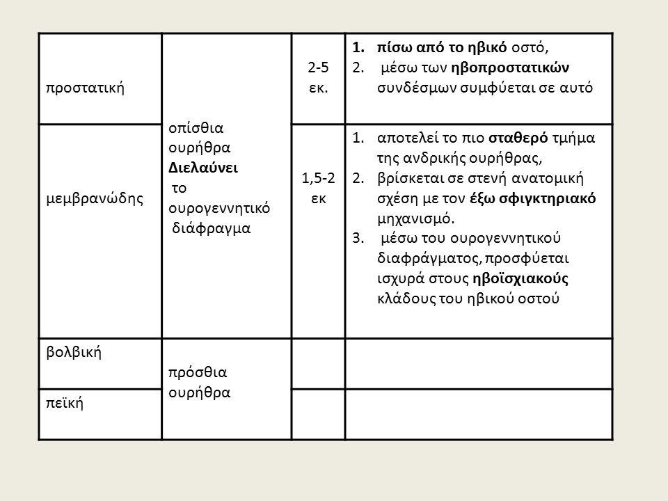 προστατική οπίσθια ουρήθρα Διελαύνει το ουρογεννητικό διάφραγμα 2-5 εκ.