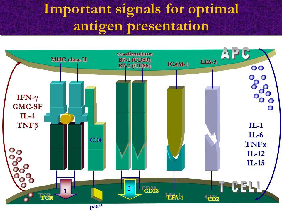 Important signals for optimal antigen presentation MHC class II TCRTCR co-stimulator B7-1 (CD80) B7-2 (CD86) co-stimulator B7-1 (CD80) B7-2 (CD86) 1 2 CD4 p56 lck IFN-γ GMC-SFIL-4 TNFβ IL-1IL-6 TNFα IL-12 IL-15 LFA-1LFA-1 CD2CD2 ICAM-1ICAM-1 LFA-3LFA-3 CD28CD28