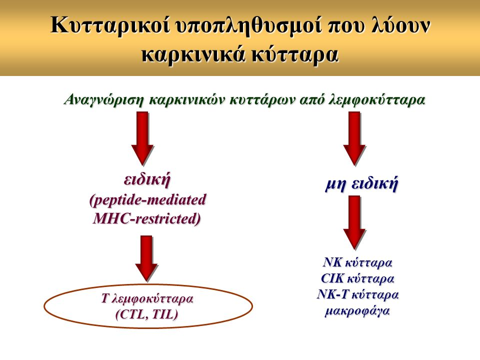 Κυτταρικοί υποπληθυσμοί που λύουν καρκινικά κύτταρα Αναγνώριση καρκινικών κυττάρων από λεμφοκύτταρα ειδική (peptide-mediated MHC-restricted) μη ειδική ΝΚ κύτταρα CIK κύτταρα ΝΚ-Τ κύτταρα μακροφάγα T λεμφοκύτταρα (CTL, TIL)