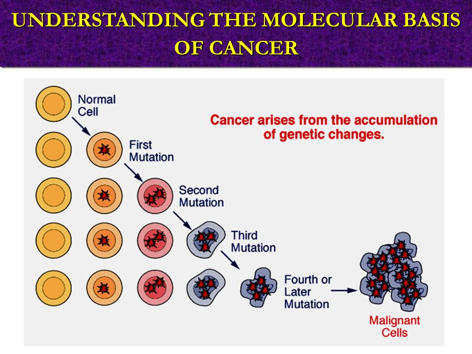 UNDERSTANDING THE MOLECULAR BASIS OF CANCER