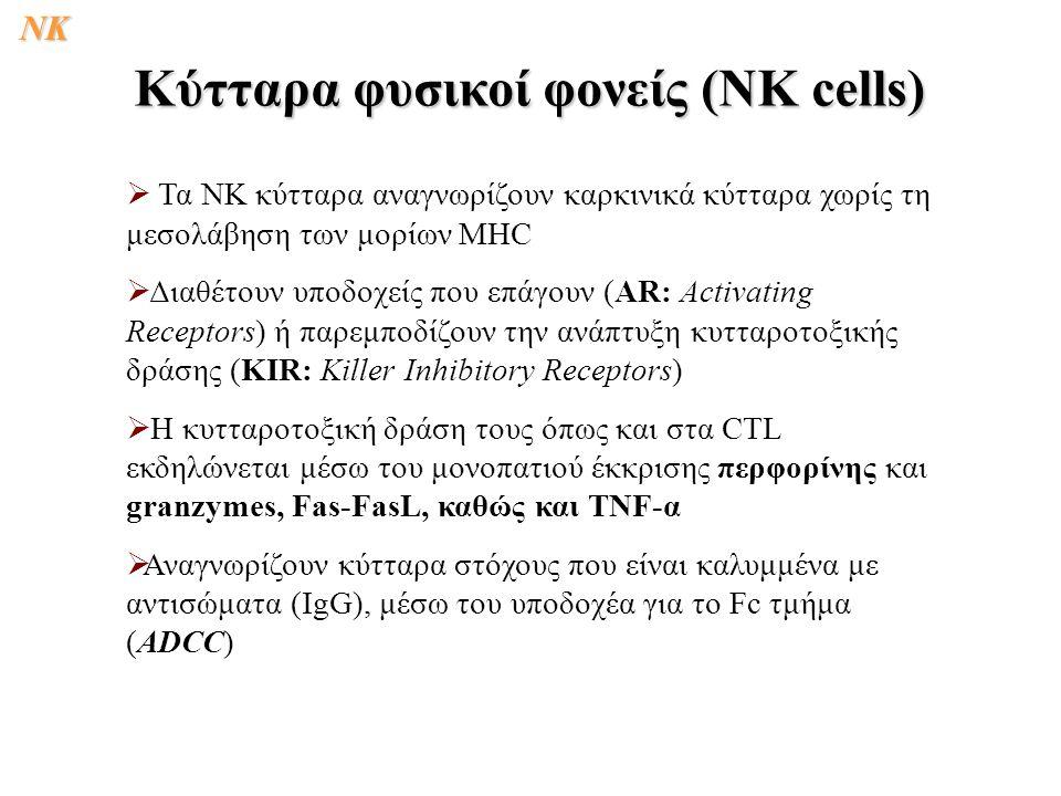   Τα ΝΚ κύτταρα αναγνωρίζουν καρκινικά κύτταρα χωρίς τη μεσολάβηση των μορίων MHC   Διαθέτουν υποδοχείς που επάγουν (ΑR: Activating Receptors) ή παρεμποδίζουν την ανάπτυξη κυτταροτοξικής δράσης (KIR: Killer Inhibitory Receptors)   Η κυτταροτοξική δράση τους όπως και στα CTL εκδηλώνεται μέσω του μονοπατιού έκκρισης περφορίνης και granzymes, Fas-FasL, καθώς και TNF-α   Αναγνωρίζουν κύτταρα στόχους που είναι καλυμμένα με αντισώματα (IgG), μέσω του υποδοχέα για το Fc τμήμα (ADCC) Κύτταρα φυσικοί φονείς (ΝΚ cells) NK