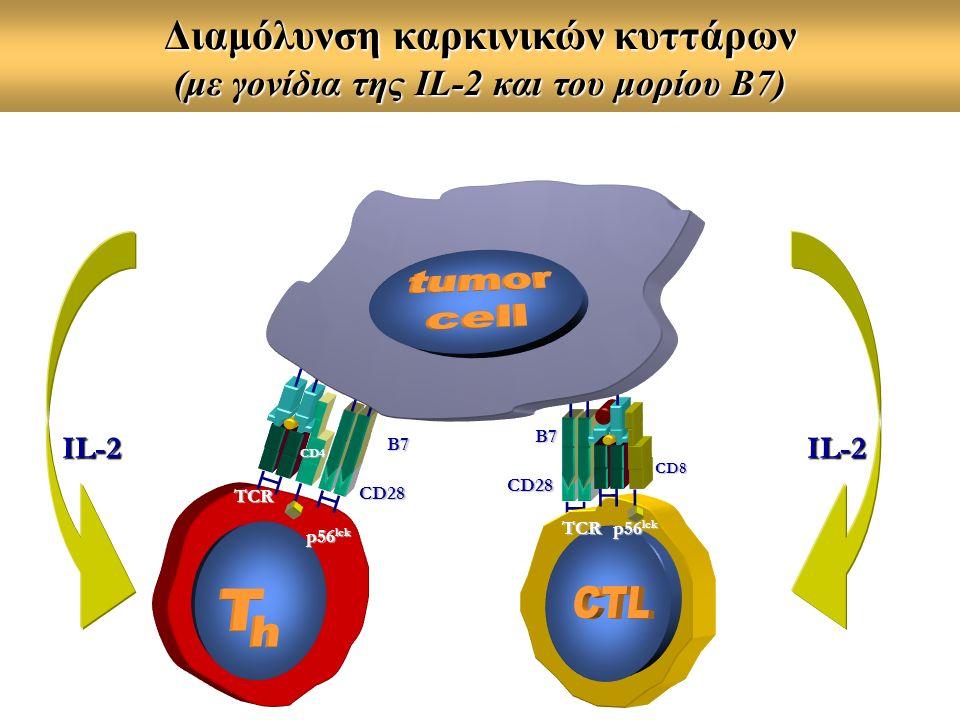 TCR CD4 p56 lck CD8 TCR B7 CD28 B7 CD28 IL-2IL-2 Διαμόλυνση καρκινικών κυττάρων (με γονίδια της IL-2 και του μορίου B7)
