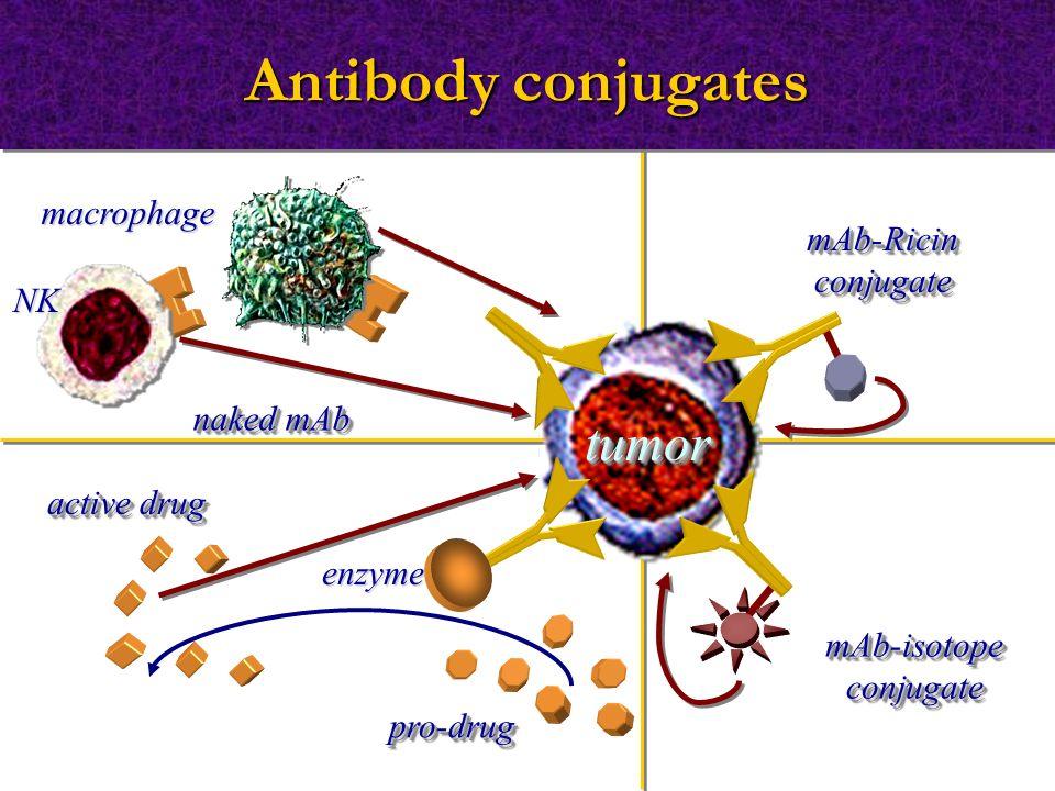 Antibody conjugates macrophage NK naked mAb tumortumor mAb-RicinconjugatemAb-Ricinconjugate active drug pro-drugpro-drug enzyme mAb-isotopeconjugatemA