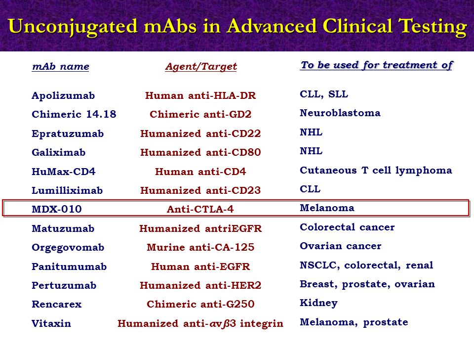 mAb name Apolizumab Chimeric 14.18 Epratuzumab Galiximab HuMax-CD4 Lumilliximab MDX-010 Matuzumab Orgegovomab Panitumumab Pertuzumab Rencarex Vitaxin Agent/Target Human anti-HLA-DR Chimeric anti-GD2 Humanized anti-CD22 Humanized anti-CD80 Human anti-CD4 Humanized anti-CD23 Anti-CTLA-4 Humanized antriEGFR Murine anti-CA-125 Human anti-EGFR Humanized anti-HER2 Chimeric anti-G250 Humanized anti- α v β 3 integrin To be used for treatment of CLL, SLL Neuroblastoma NHL Cutaneous T cell lymphoma CLL Melanoma Colorectal cancer Ovarian cancer NSCLC, colorectal, renal Breast, prostate, ovarian Kidney Melanoma, prostate Unconjugated mAbs in Advanced Clinical Testing