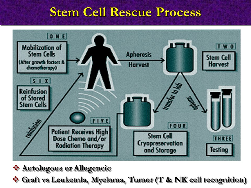 Stem Cell Rescue Process  Autologous or Allogeneic  Graft vs Leukemia, Myeloma, Tumor (T & NK cell recognition)