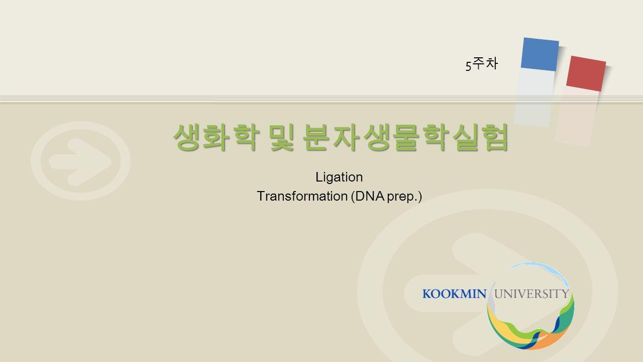 Ligation Transformation (DNA prep.) 생화학 및 분자생물학실험 5 주차