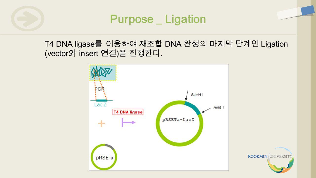 T4 DNA ligase 를 이용하여 재조합 DNA 완성의 마지막 단계인 Ligation (vector 와 insert 연결 ) 을 진행한다. Purpose _ Ligation