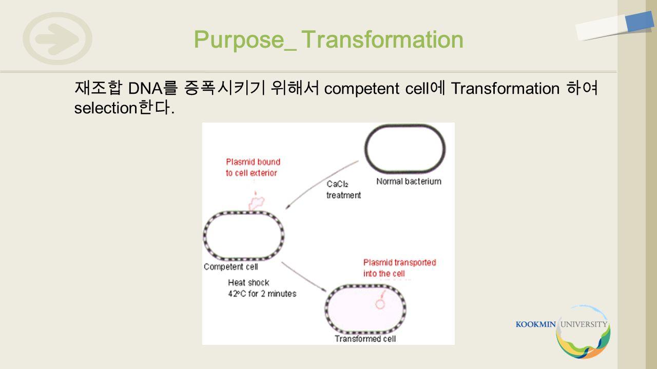 재조합 DNA 를 증폭시키기 위해서 competent cell 에 Transformation 하여 selection 한다. Purpose_ Transformation