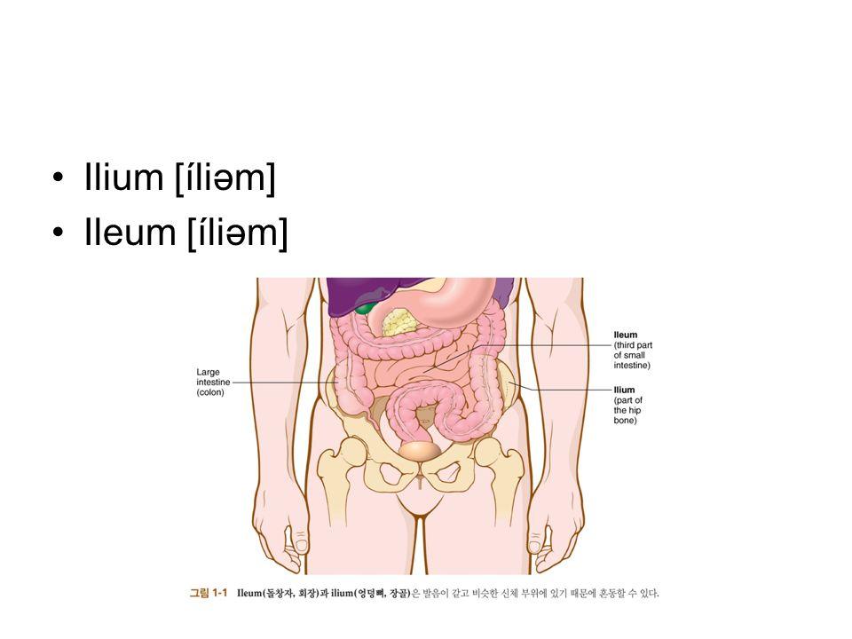 Ilium [íliəm] Ileum [íliəm]