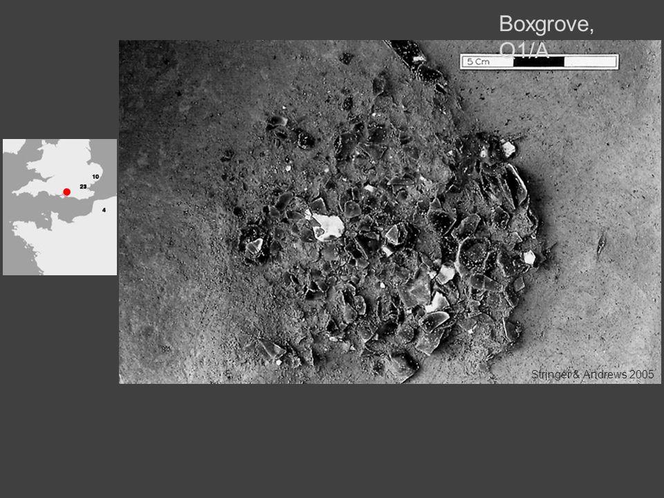 Boxgrove, Q1/A Stringer & Andrews 2005