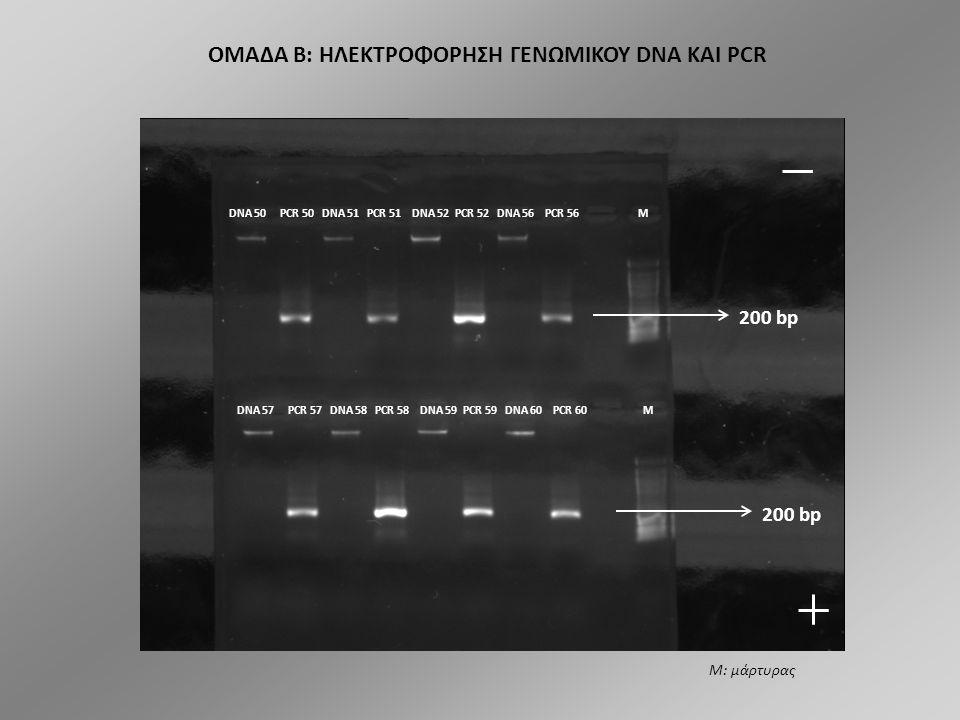 ΟΜΑΔΑ A: ΗΛΕΚΤΡΟΦΟΡΗΣΗ ΓΕΝΩΜΙΚΟΥ DNA ΚΑΙ PCR DNA 16 DNA 16 PCR 16 DNA 18 PCR 18 DNA 20 PCR 20 DNA24 PCR 24 M DNA 24 DNA 25 PCR 25 DNA 26 PCR 26 DNA 27 DNA 27 PCR 27 M M 200 bp Μ: μάρτυρας