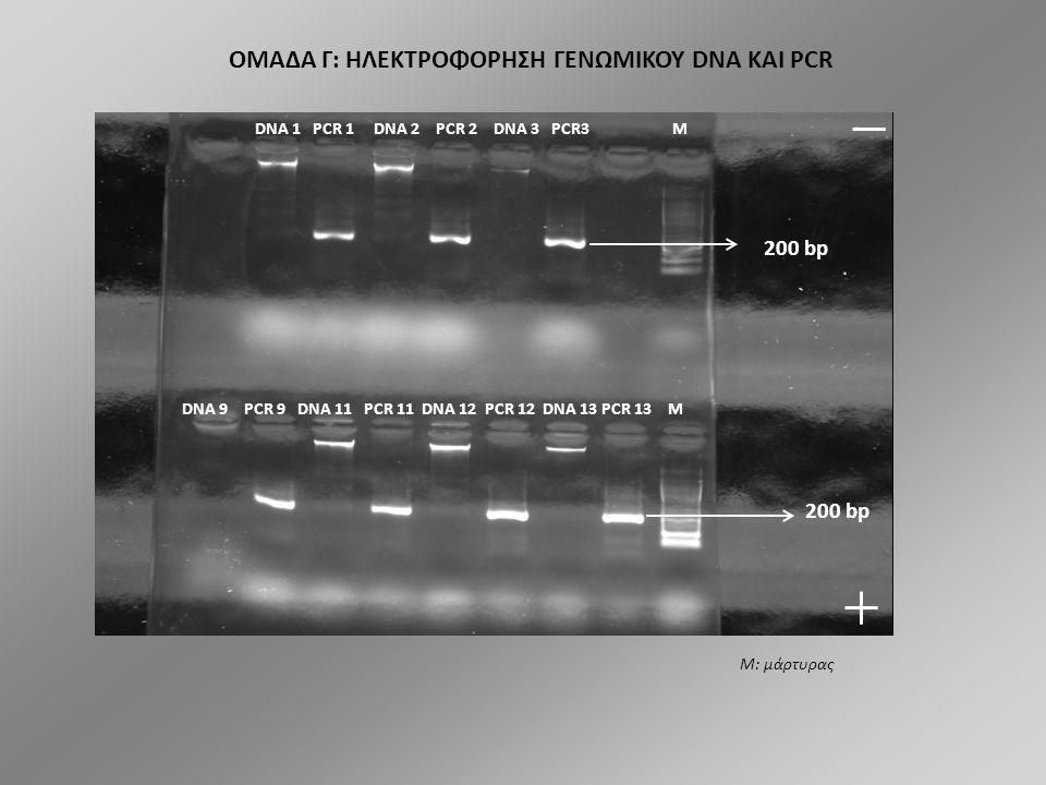 ΟΜΑΔΑ B: ΗΛΕΚΤΡΟΦΟΡΗΣΗ ΓΕΝΩΜΙΚΟΥ DNA ΚΑΙ PCR DNA 20 PCR 20 DNA 48 PCR 48 DNA 49 PCR 49 DNA 53 PCR 53 DNA 54 M PCR 54 DNA 55 PCR 55 DNA 61 PCR 61 DNA 62 PCR 62 DNA 30 PCR 30 M 200 bp Μ: μάρτυρας