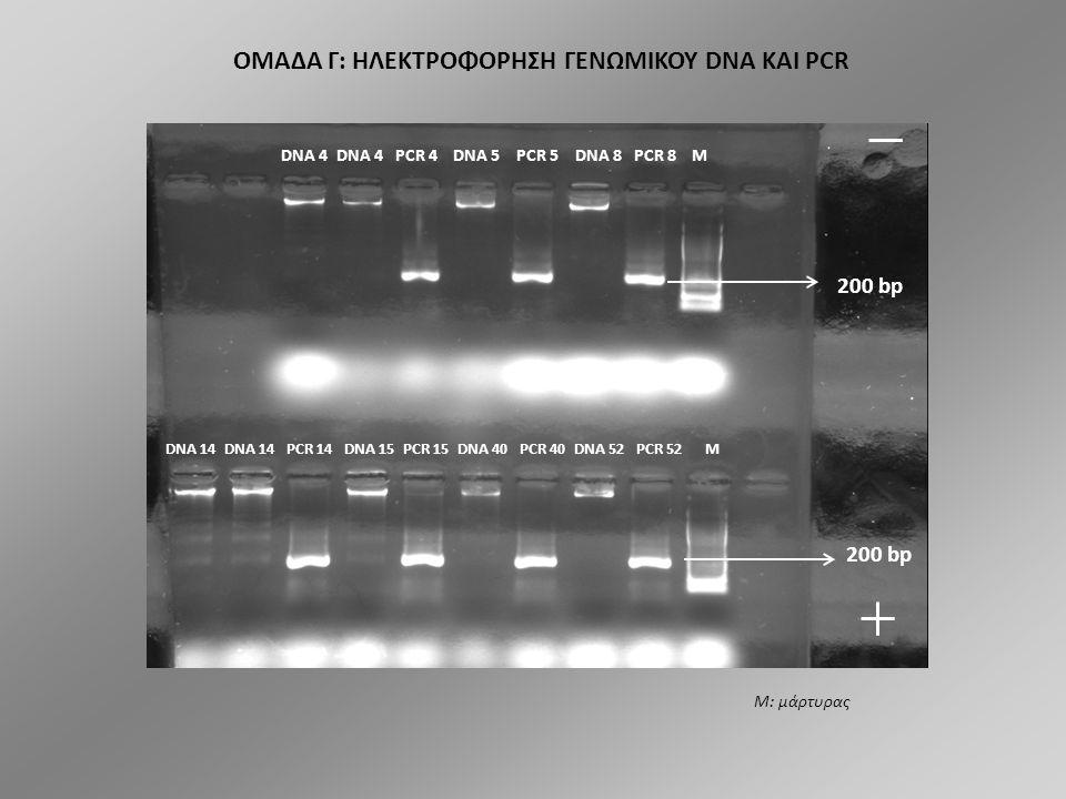 DNA 1 PCR 1 DNA 2 PCR 2 DNA 3 PCR3 M DNA 9 PCR 9 DNA 11 PCR 11 DNA 12 PCR 12 DNA 13 PCR 13 M ΟΜΑΔΑ Γ: ΗΛΕΚΤΡΟΦΟΡΗΣΗ ΓΕΝΩΜΙΚΟΥ DNA ΚΑΙ PCR Μ: μάρτυρας 200 bp