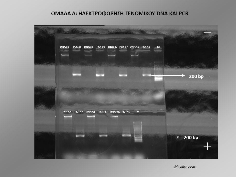 ΟΜΑΔΑ Γ: ΗΛΕΚΤΡΟΦΟΡΗΣΗ ΓΕΝΩΜΙΚΟΥ DNA ΚΑΙ PCR DNA 4 DNA 4 PCR 4 DNA 5 PCR 5 DNA 8 PCR 8 M DNA 14 DNA 14 PCR 14 DNA 15 PCR 15 DNA 40 PCR 40 DNA 52 PCR 52 M 200 bp Μ: μάρτυρας