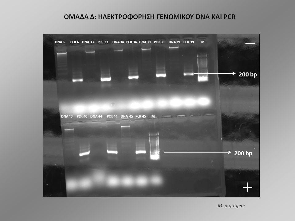 ΟΜΑΔΑ Δ: ΗΛΕΚΤΡΟΦΟΡΗΣΗ ΓΕΝΩΜΙΚΟΥ DNA ΚΑΙ PCR DNA 35 PCR 35 DNA 36 PCR 36 DNA 37 PCR 37 DNA 41 PCR 41 M DNA 42 PCR 42 DNA 43 PCR 43 DNA 46 PCR 46 M Μ: μάρτυρας 200 bp