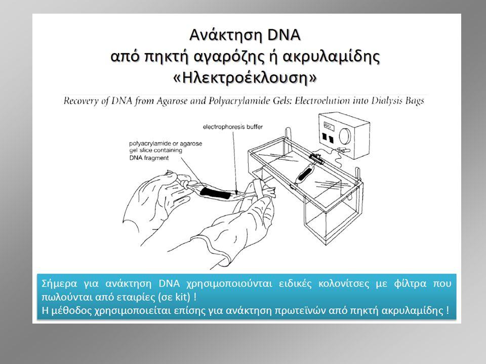 ΟΜΑΔΑ Δ: ΗΛΕΚΤΡΟΦΟΡΗΣΗ ΓΕΝΩΜΙΚΟΥ DNA ΚΑΙ PCR DNA 6 PCR 6 DNA 33 PCR 33 DNA 34 PCR 34 DNA 38 PCR 38 DNA 39 PCR 39 M DNA 40 PCR 40 DNA 44 PCR 44 DNA 45 PCR 45 M 200 bp Μ: μάρτυρας