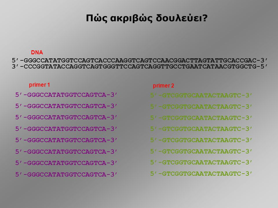 PCR Polymerase Chain Reaction….
