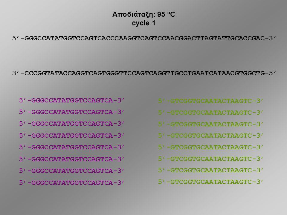 5'-GGGCCATATGGTCCAGTCACCCAAGGTCAGTCCAACGGACTTAGTATTGCACCGAC-3' 3'-CCCGGTATACCAGGTCAGTGGGTTCCAGTCAGGTTGCCTGAATCATAACGTGGCTG-5' DNA 5'-GGGCCATATGGTCCAGTCA-3' 5'-GTCGGTGCAATACTAAGTC-3' primer 1 primer 2 5'-GTCGGTGCAATACTAAGTC-3' 5'-GGGCCATATGGTCCAGTCA-3' Πώς ακριβώς δουλεύει