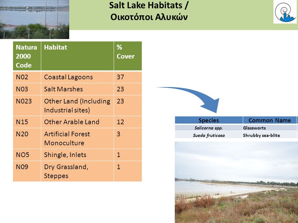 Salt Lake Habitats / Οικοτόποι Αλυκών Natura 2000 Code Habitat% Cover N02Coastal Lagoons37 N03Salt Marshes23 N023Other Land (Including Industrial sites) 23 N15Other Arable Land12 N20Artificial Forest Monoculture 3 NO5Shingle, Inlets1 N09Dry Grassland, Steppes 1 SpeciesCommon Name Salicorna spp.Glassworts Sueda fruticosaShrubby sea-blite