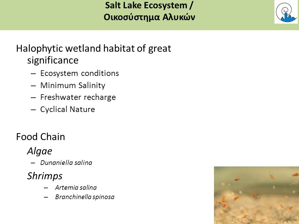 Halophytic wetland habitat of great significance – Ecosystem conditions – Minimum Salinity – Freshwater recharge – Cyclical Nature Food Chain Algae – Dunaniella salina Shrimps – Artemia salina – Branchinella spinosa Salt Lake Ecosystem / Οικοσύστημα Αλυκών