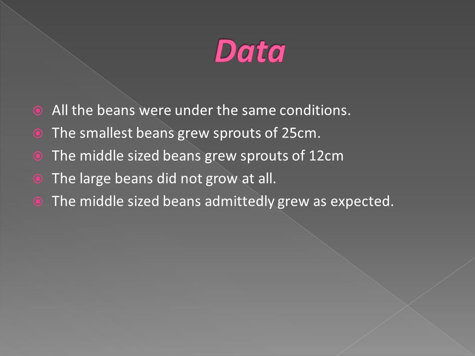  All the beans were under the same conditions.  The smallest beans grew sprouts of 25cm.