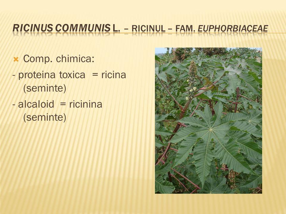  Comp. chimica: - proteina toxica = ricina (seminte) - alcaloid = ricinina (seminte)