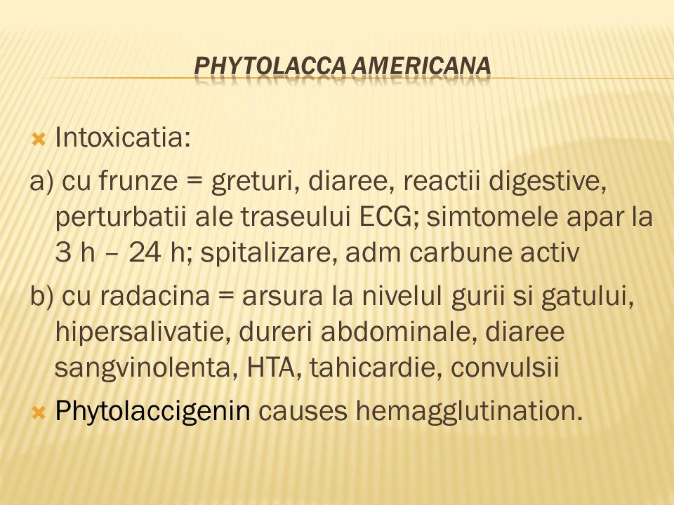  Intoxicatia: a) cu frunze = greturi, diaree, reactii digestive, perturbatii ale traseului ECG; simtomele apar la 3 h – 24 h; spitalizare, adm carbune activ b) cu radacina = arsura la nivelul gurii si gatului, hipersalivatie, dureri abdominale, diaree sangvinolenta, HTA, tahicardie, convulsii  Phytolaccigenin causes hemagglutination.