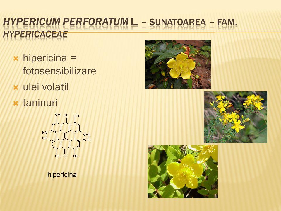  hipericina = fotosensibilizare  ulei volatil  taninuri hipericina