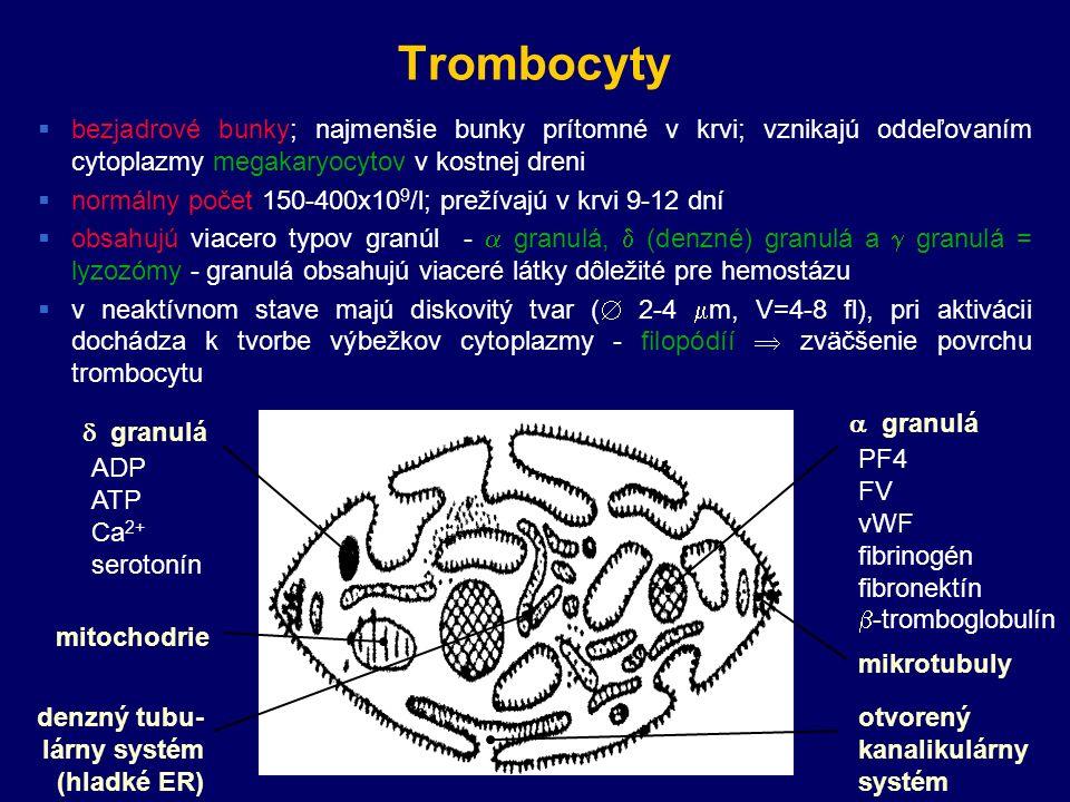Trombocyty  bezjadrové bunky; najmenšie bunky prítomné v krvi; vznikajú oddeľovaním cytoplazmy megakaryocytov v kostnej dreni  normálny počet 150-400x10 9 /l; prežívajú v krvi 9-12 dní  obsahujú viacero typov granúl -  granulá,  (denzné) granulá a  granulá = lyzozómy - granulá obsahujú viaceré látky dôležité pre hemostázu  v neaktívnom stave majú diskovitý tvar (  2-4  m, V=4-8 fl), pri aktivácii dochádza k tvorbe výbežkov cytoplazmy - filopódíí  zväčšenie povrchu trombocytu  granulá  granulá ADP ATP Ca 2+ serotonín PF4 FV vWF fibrinogén fibronektín  -tromboglobulín mitochodrie otvorený kanalikulárny systém denzný tubu- lárny systém (hladké ER) mikrotubuly
