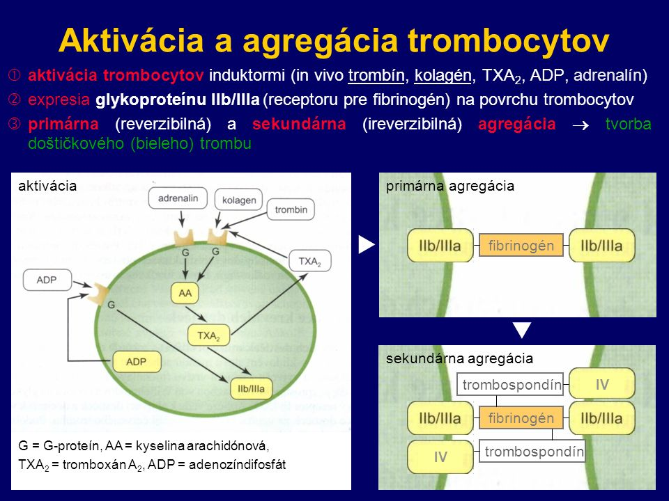 Aktivácia a agregácia trombocytov  aktivácia trombocytov induktormi (in vivo trombín, kolagén, TXA 2, ADP, adrenalín)  expresia glykoproteínu IIb/IIIa (receptoru pre fibrinogén) na povrchu trombocytov  primárna (reverzibilná) a sekundárna (ireverzibilná) agregácia  tvorba doštičkového (bieleho) trombu G = G-proteín, AA = kyselina arachidónová, TXA 2 = tromboxán A 2, ADP = adenozíndifosfát aktivácia  fibrinogén trombospondín sekundárna agregácia IV  fibrinogén primárna agregácia