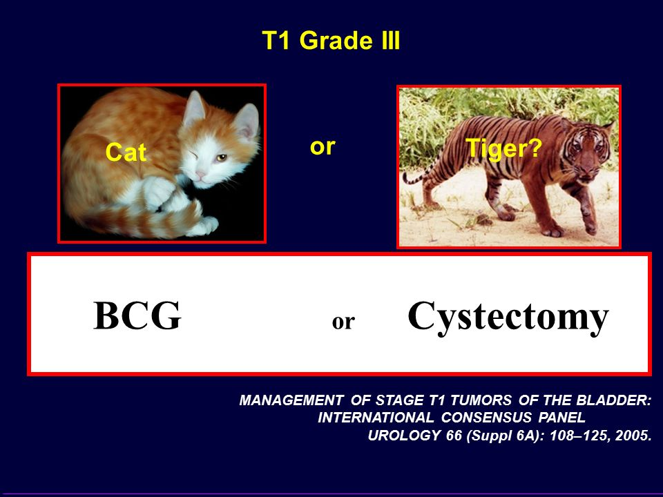 T1 Grade III Tiger? Cat MANAGEMENT OF STAGE T1 TUMORS OF THE BLADDER: INTERNATIONAL CONSENSUS PANEL UROLOGY 66 (Suppl 6A): 108–125, 2005. or (LOE 3-4)