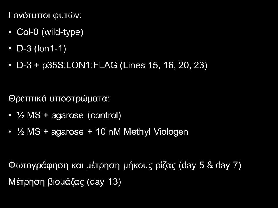 Γονότυποι φυτών: Col-0 (wild-type) D-3 (lon1-1) D-3 + p35S:LON1:FLAG (Lines 15, 16, 20, 23) Θρεπτικά υποστρώματα: ½ MS + agarose (control) ½ MS + agar