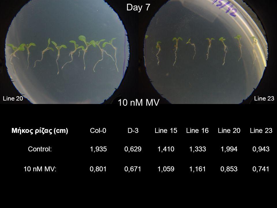 Line 23Line 20 Day 7 10 nM MV Μήκος ρίζας (cm)Col-0D-3Line 15Line 16Line 20Line 23 Control:1,9350,6291,4101,3331,9940,943 10 nM MV:0,8010,6711,0591,16