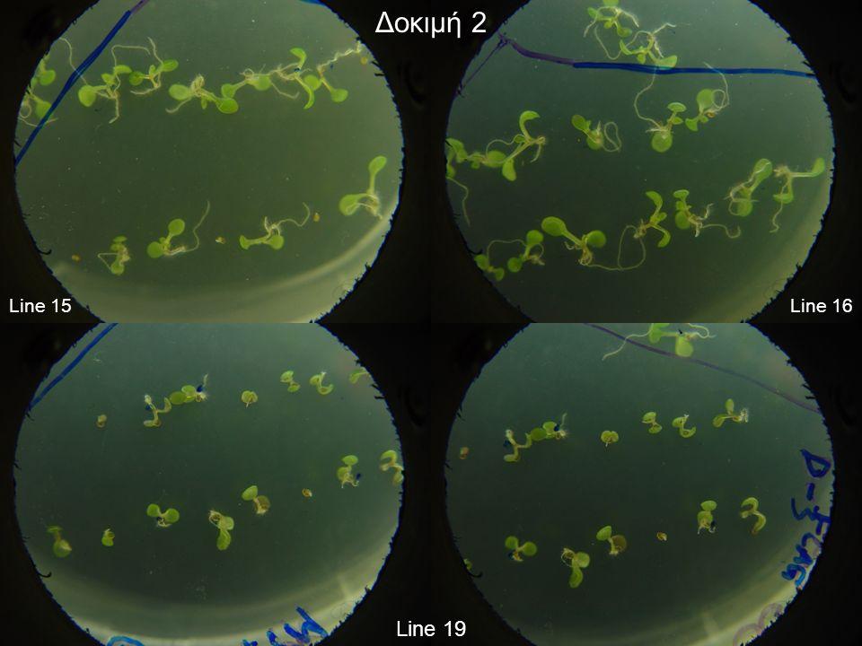 AT4G02530 Chloroplast thylakoid lumen protein Group II