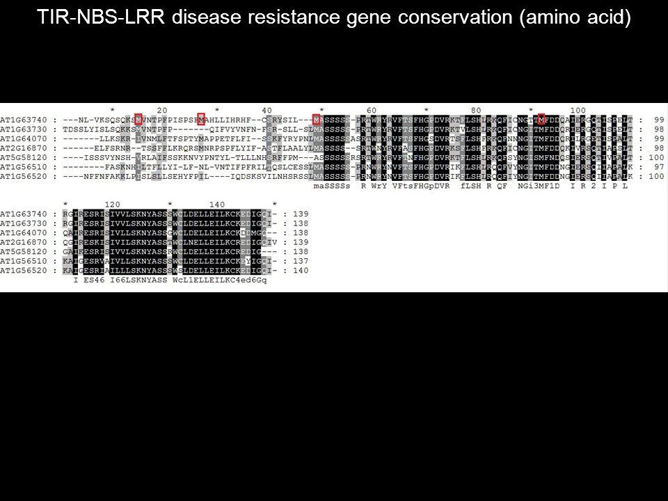 TIR-NBS-LRR disease resistance gene conservation (amino acid)