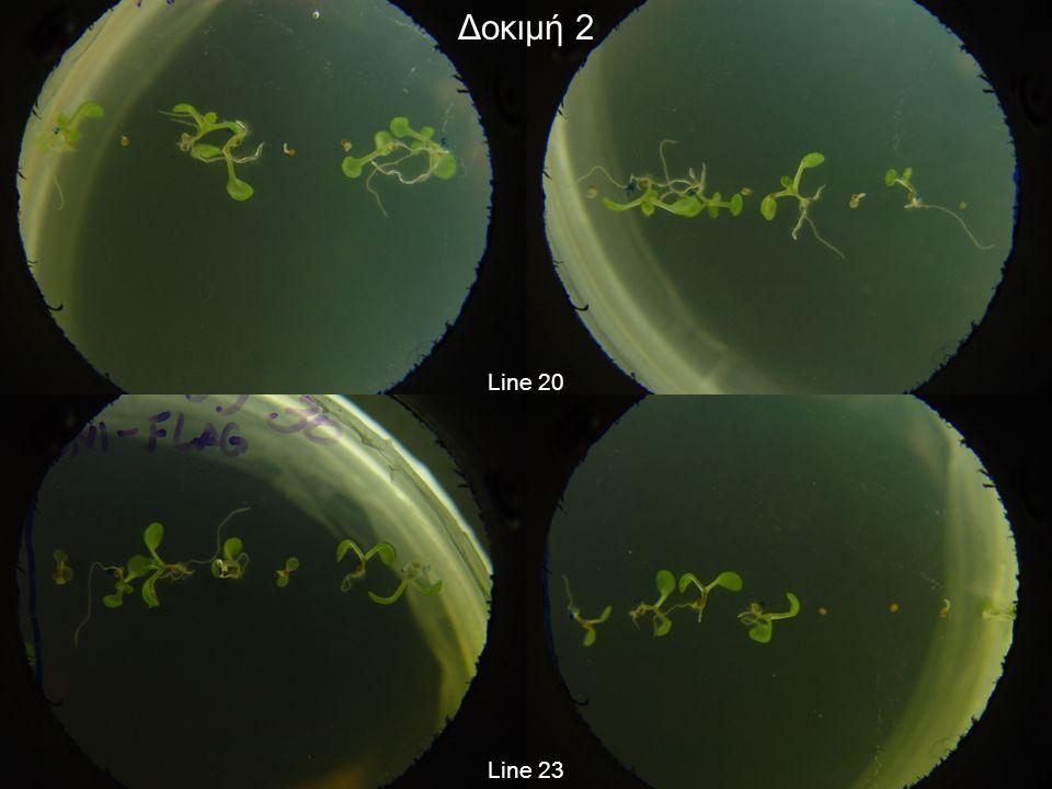 1 row = 100 bp AT4G02530 (chloroplast thylakoid lumen protein) annotated start codon recommended start codon