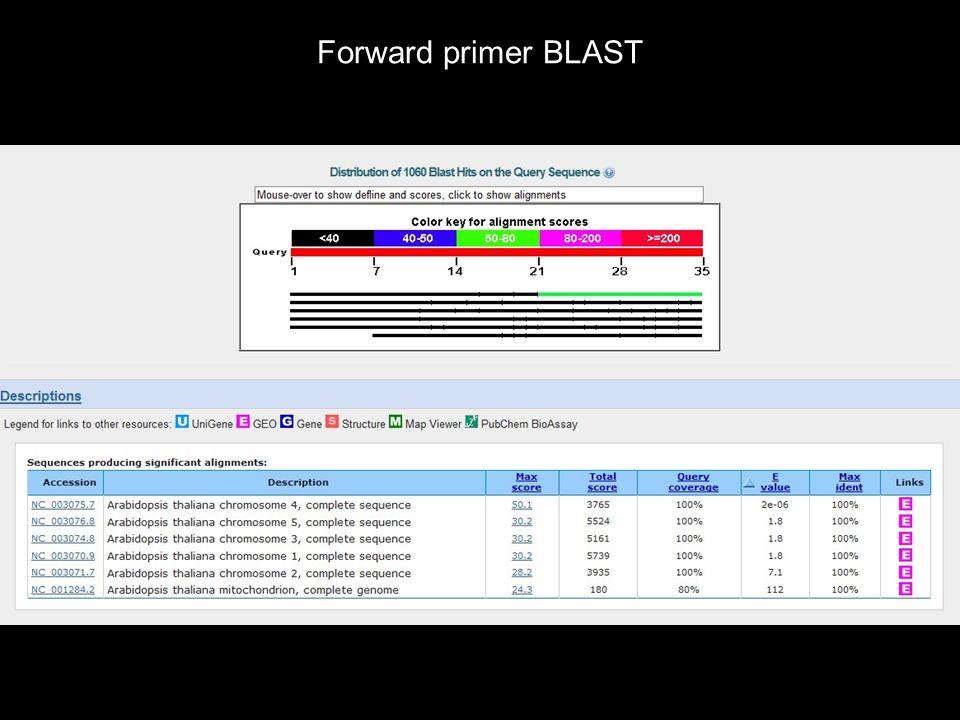 Forward primer BLAST