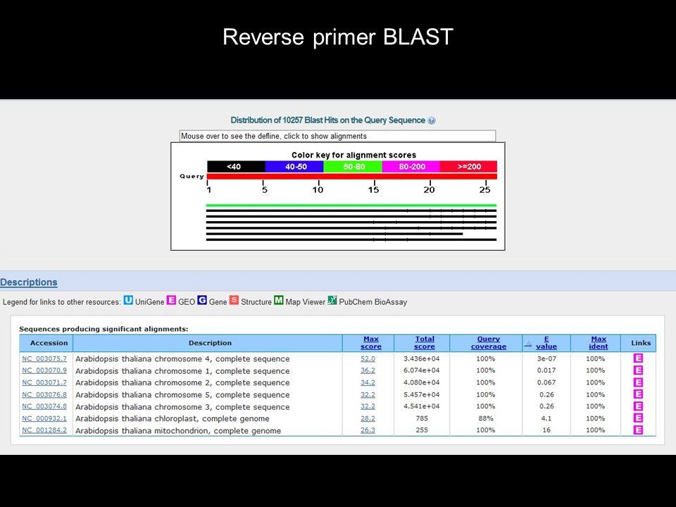 Reverse primer BLAST