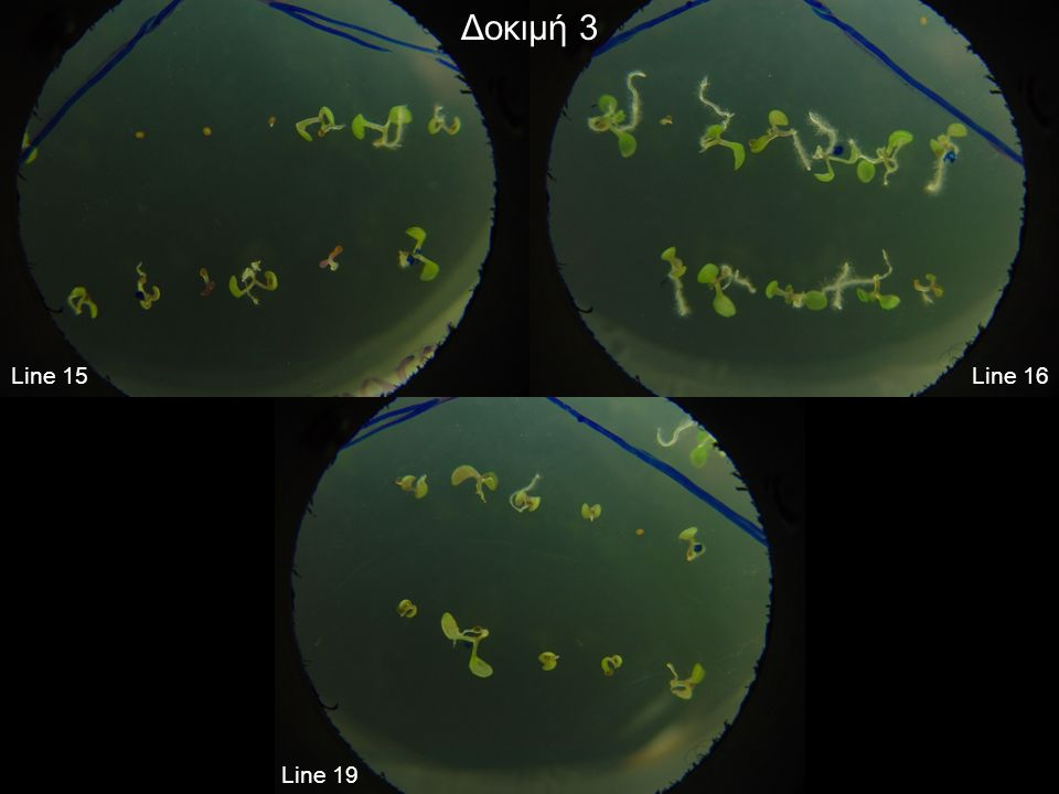 EST search BLASTn: Met #1…Met #2 + 200 bp X ESTs (Arabidopsis thaliana)