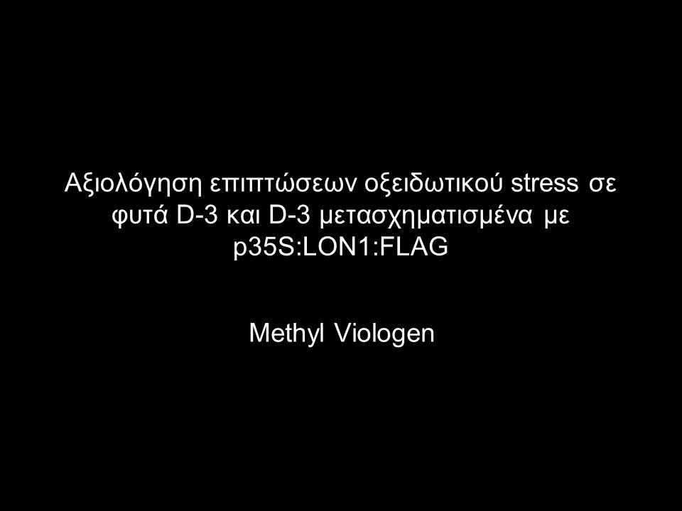 Γονότυποι φυτών: Col-0 (wild-type) D-3 (lon1-1) D-3 + p35S:LON1:FLAG (Lines 15, 16, 20, 23) Θρεπτικά υποστρώματα: ½ MS + agarose (control) ½ MS + agarose + 10 nM Methyl Viologen Φωτογράφηση και μέτρηση μήκους ρίζας (day 5 & day 7) Μέτρηση βιομάζας (day 13)