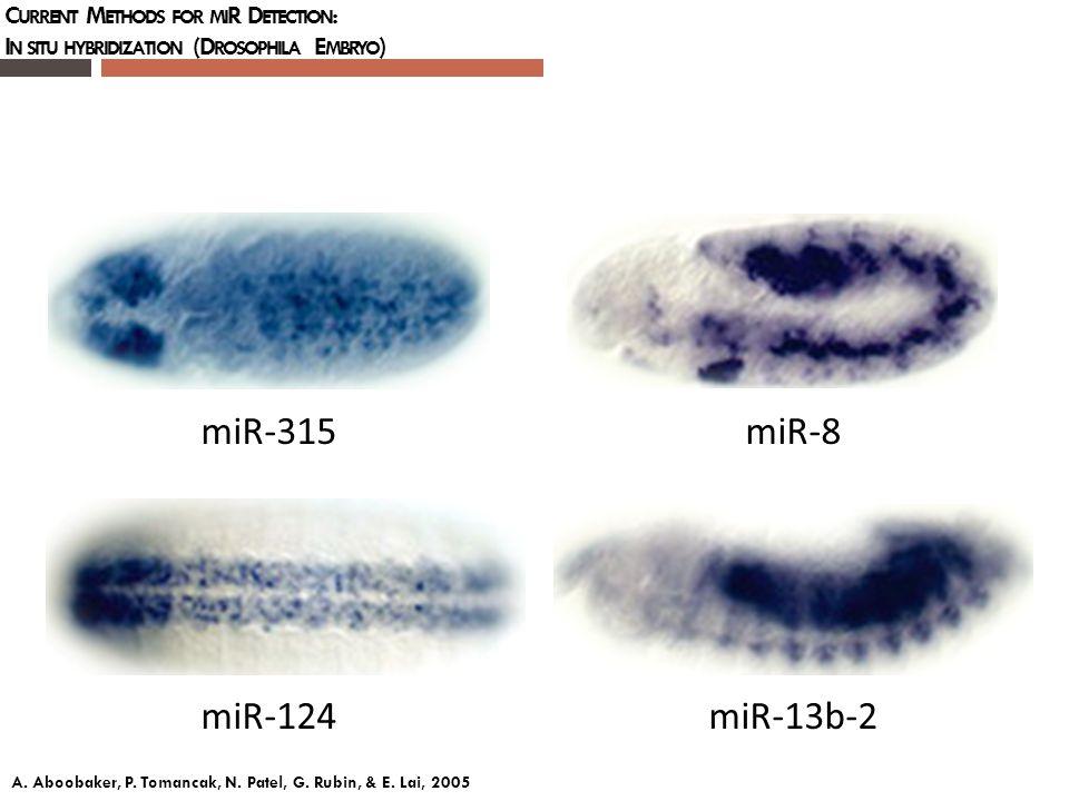 C URRENT M ETHODS FOR MI R D ETECTION : I N SITU HYBRIDIZATION (D ROSOPHILA E MBRYO ) miR-315 miR-124miR-8 miR-13b-2 A. Aboobaker, P. Tomancak, N. Pat