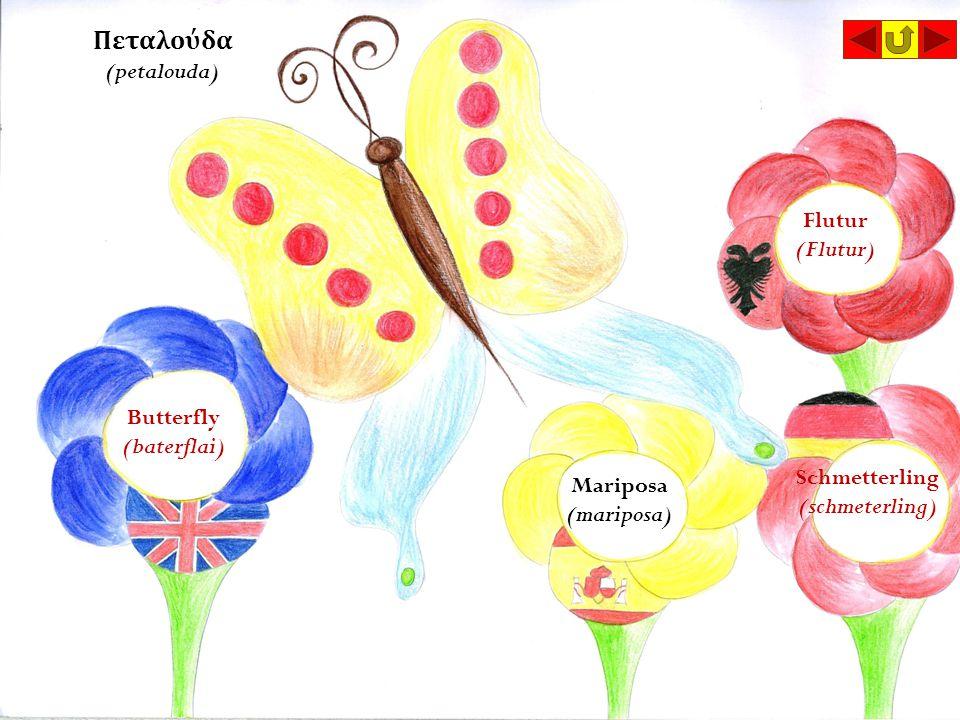 Πεταλούδα (petalouda) Butterfly (baterflai) Flutur (Flutur) Mariposa (mariposa) Schmetterling (schmeterling)